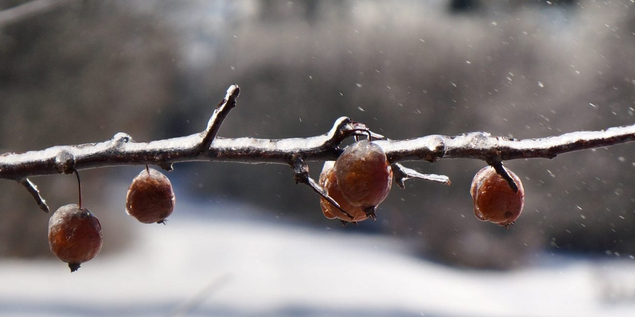gartentipp obstgehoelze winter