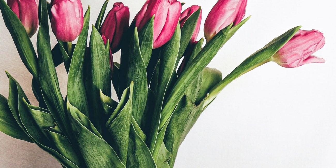 gartentipp tulpen vase