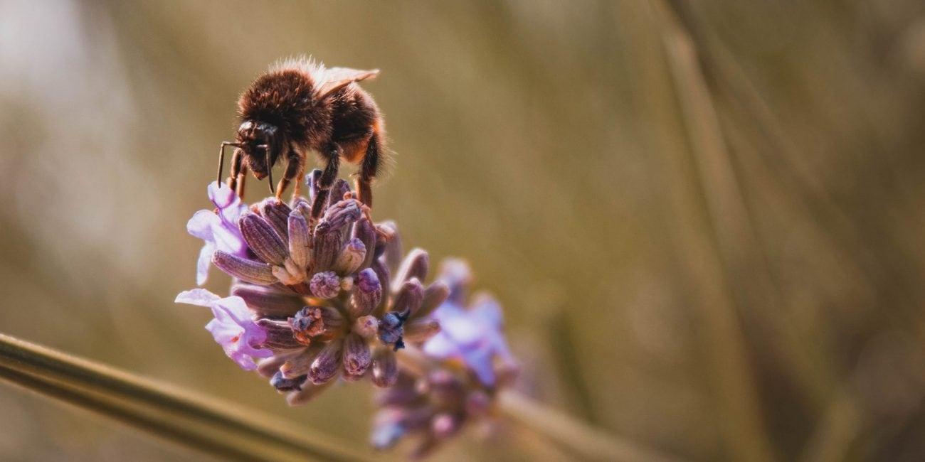 gartentipp insektenfreundlich