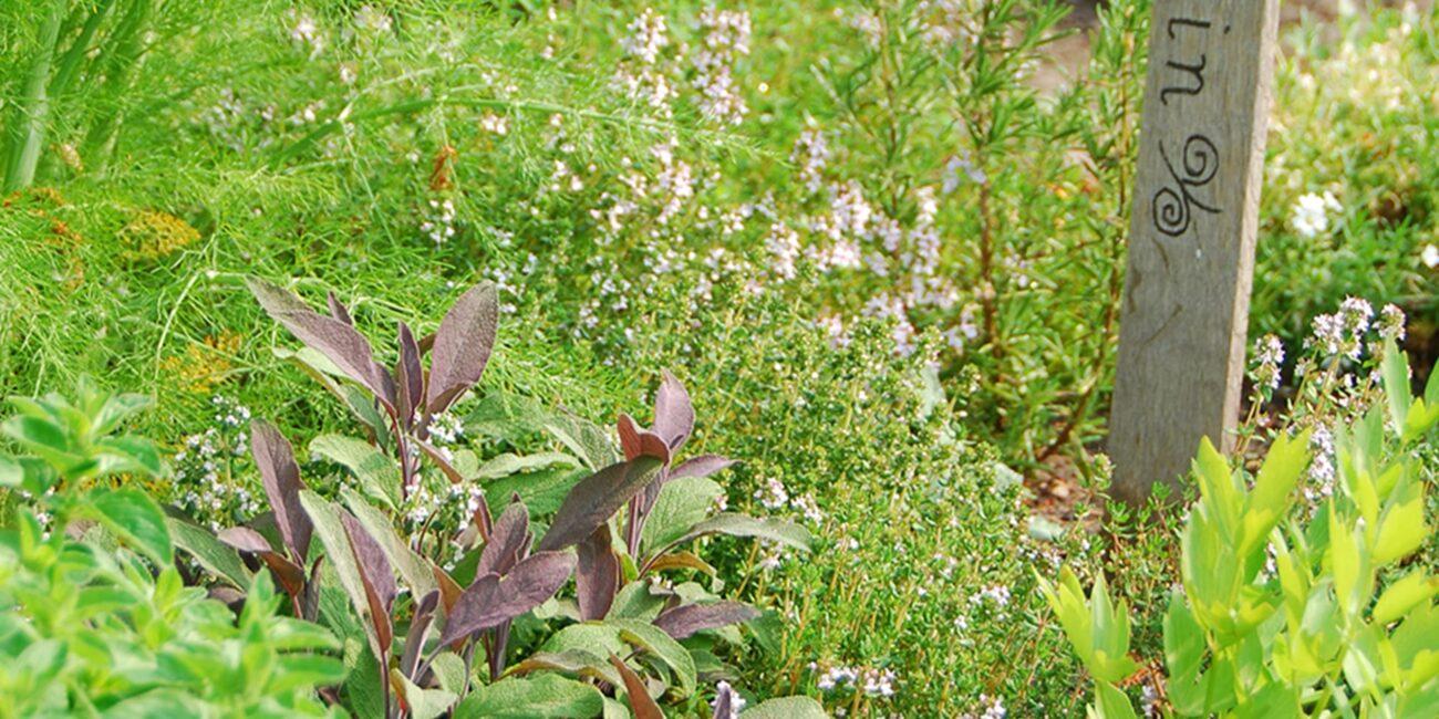 Gartentipp Grillkraueter
